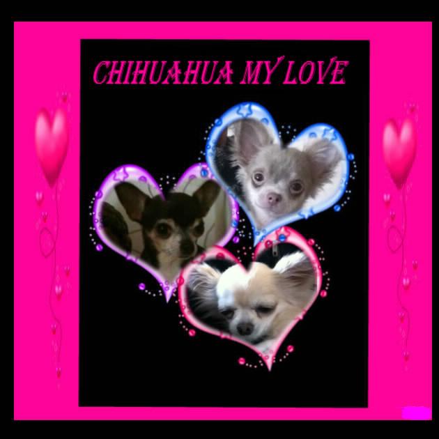 CHIHUAHUA-MY-LOVE