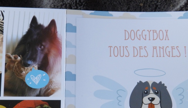 doggy210.jpg