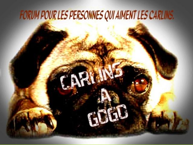 CARLINS A GOGO.
