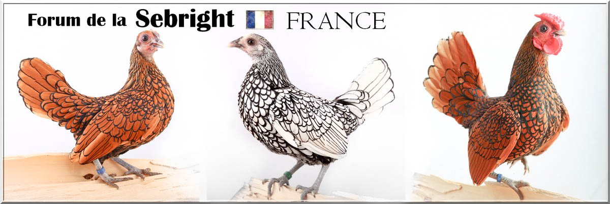 Forum de la  SEBRIGHT - France