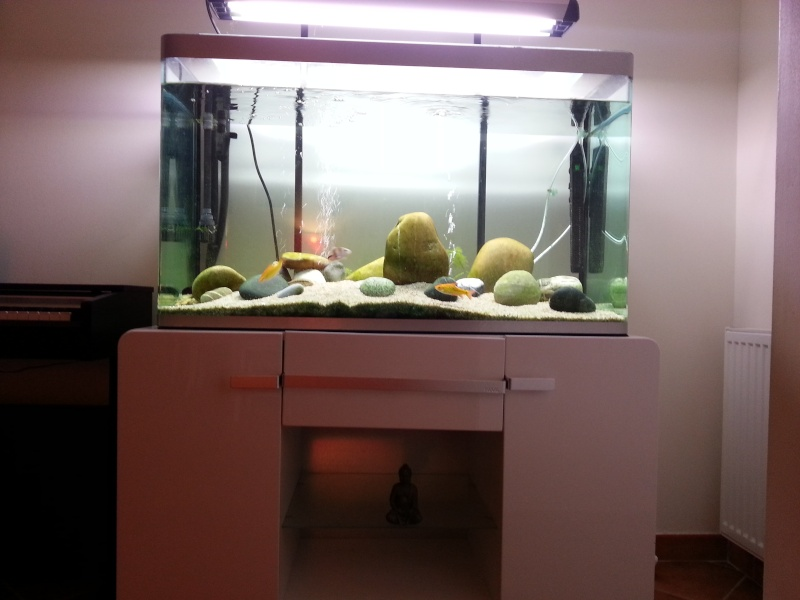 aquarium osaka 320 images. Black Bedroom Furniture Sets. Home Design Ideas