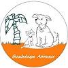 Les chiens de GUADELOUPE ANIMAUX