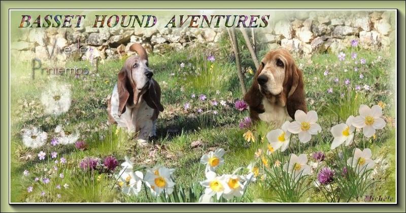 basset hound aventures