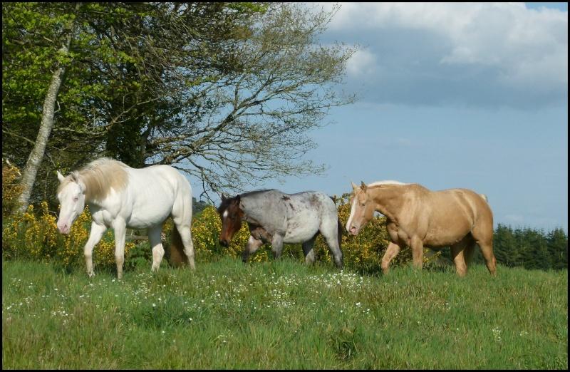 Forum sur le Quarter Horse