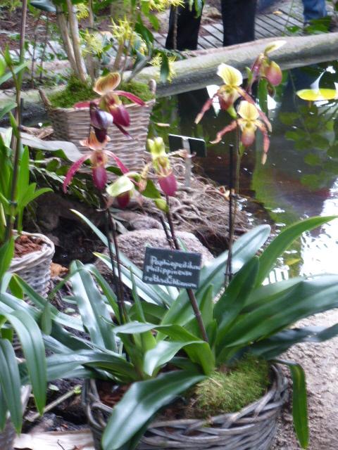 d tails et noms de quelques orchid es de l 39 expo du jardin