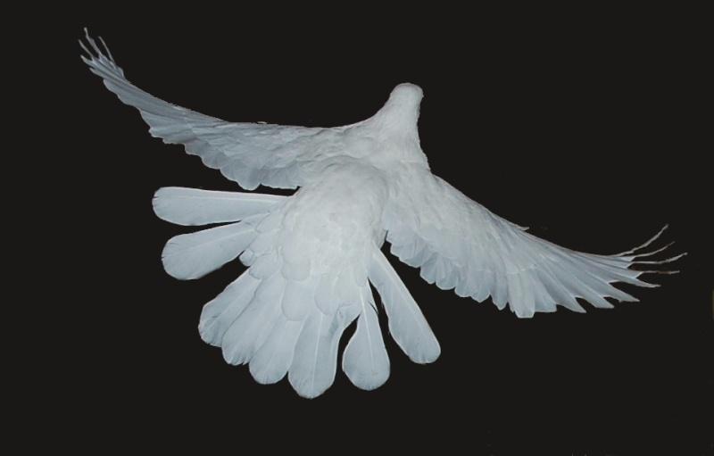 pigeon24.jpg
