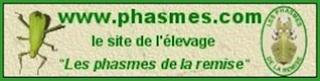 www.phasmes.com
