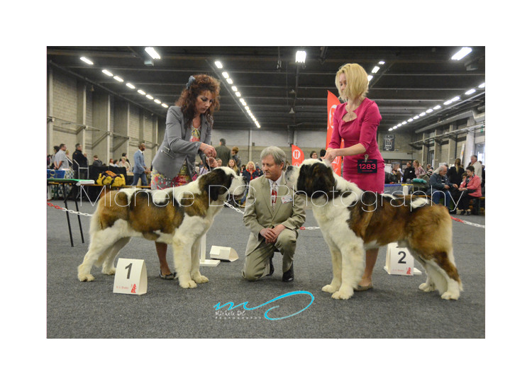 Rencontre canine lyon