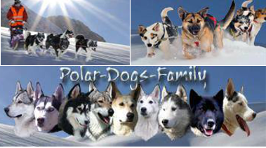 www.polardogs-family.forumprofi.de