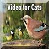 Photos et vidéos