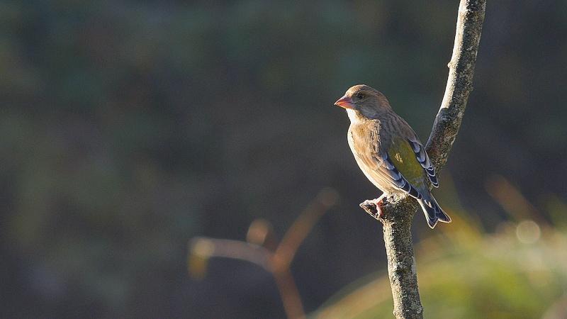 Oiseaux d'hiver...