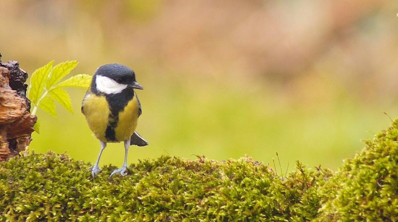 Nouvelles photos d'oiseaux à la mangeoire