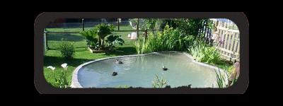 Les parcs, bassins, volières... d'Ailes d'Ornement