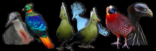 ( fiches d'élevage ) Les Oiseaux de Volière