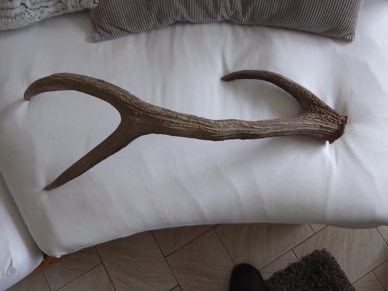 comment nettoyer un vieux bois de cerf forum grand. Black Bedroom Furniture Sets. Home Design Ideas