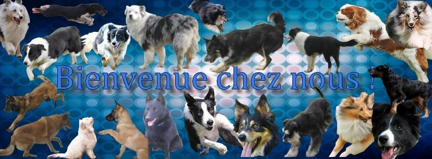 Club Canin de Messigny et Vantoux
