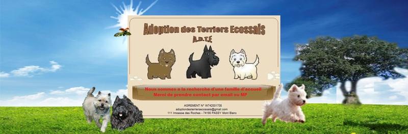 Adoption des Terriers Ecossais
