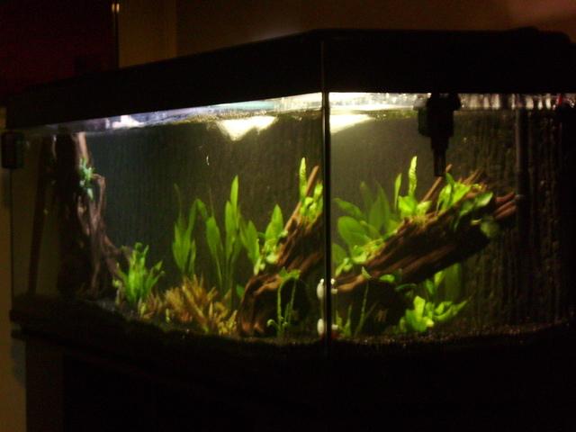 Aquarium de 600 litres pour piranha