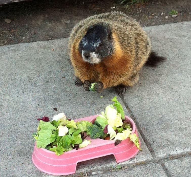 marmot10.jpg