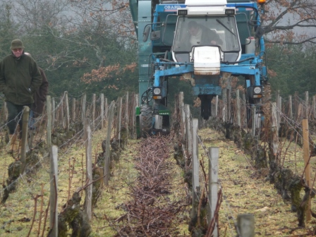 Sarments de vigne photos de valorisation en bois energie for Combien coute une etude de sol