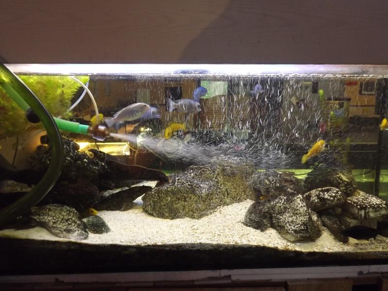 Aquarium 350 litres 7 discus juwel trigon 350 for Aquarium 350 litres