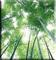 Le règne végétal