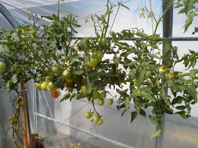 Le petit jardin viens caen 2218 - Mobilier jardin waterloo villeurbanne ...