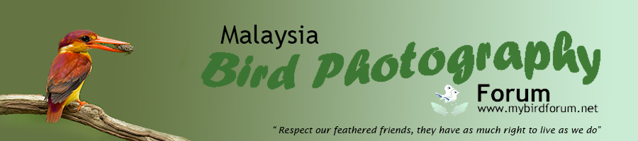 Malaysia Bird Photography Forum
