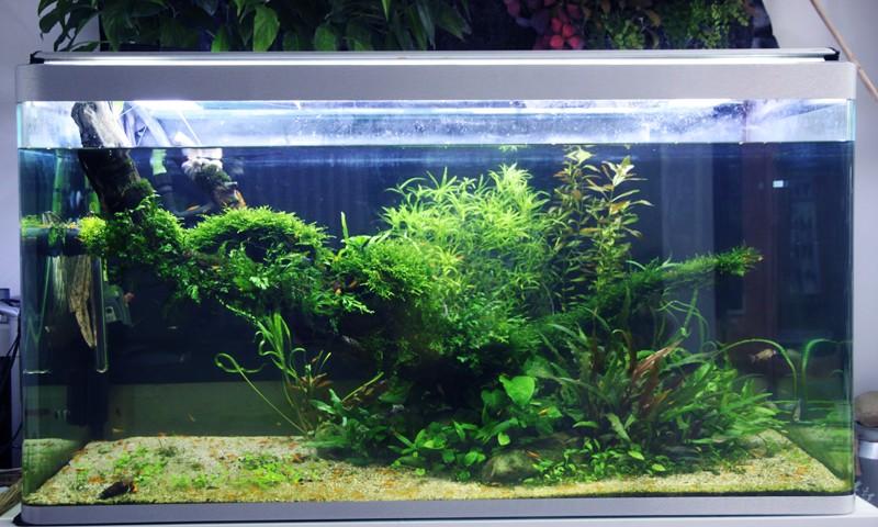 Mur v g tal avec aquarium de 320l paludarium page 5 for Mur vegetal aquarium