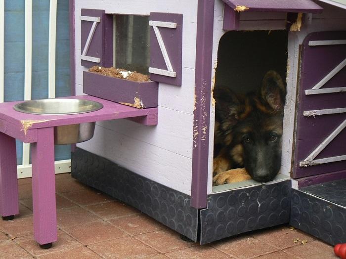 Fabriquer une niche pour chien - Fabriquer une niche pour chien facile ...
