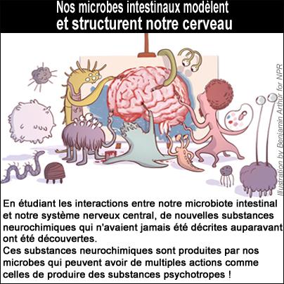 Bactéries et autres microbes peuvent revêtir la fonction de