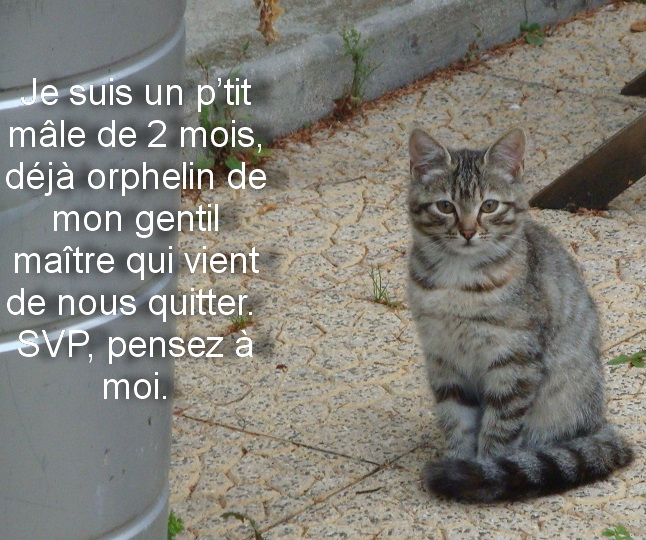 Chat vallauris