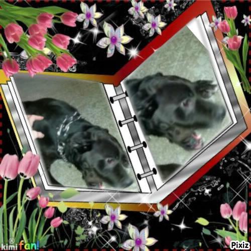 HD wallpapers reve de chien