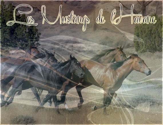 Les Mustangs de L'Havane
