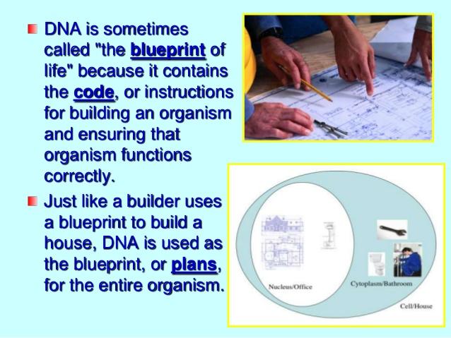 Dna the instructional blueprint of life malvernweather Choice Image
