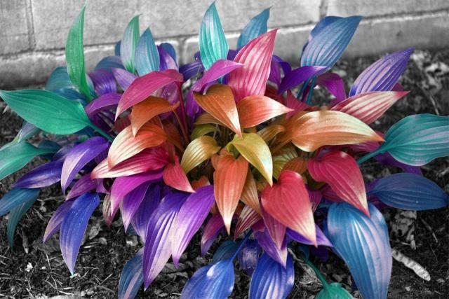 sjældne blomster