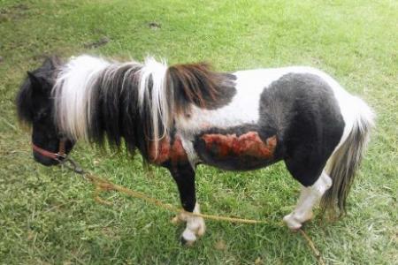 poney 4x4
