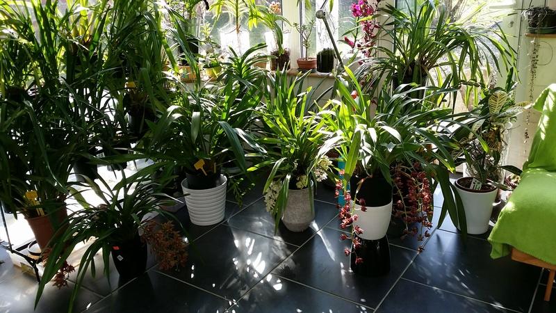partage de la technique de ma grand m re pour soigner ses orchid es. Black Bedroom Furniture Sets. Home Design Ideas