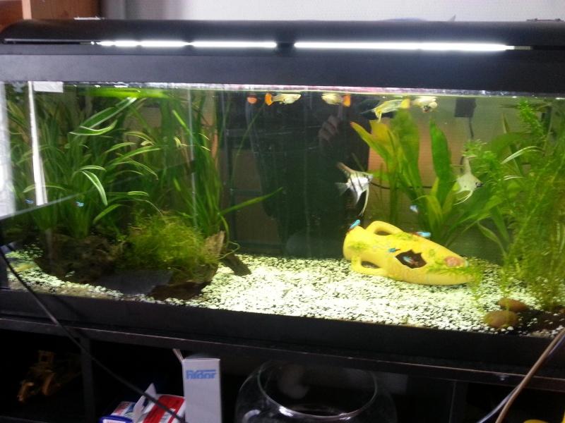 nouveau aquarium 110L