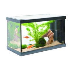 d coration aquarium 20l. Black Bedroom Furniture Sets. Home Design Ideas
