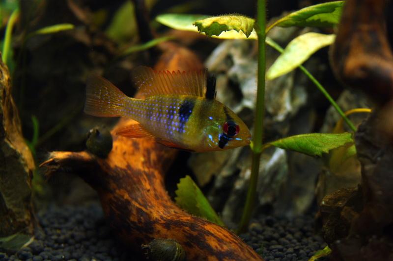 Nouvel aquarium nouveaux habitants for Vendeur aquarium