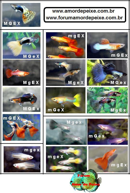 Goldfish types chart