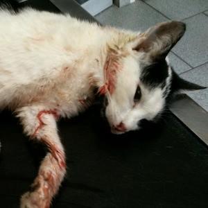 Chats et chatons errants comment les aider - Combien de portee par an pour un chat ...