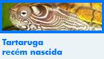 Tartaruga recém nascida