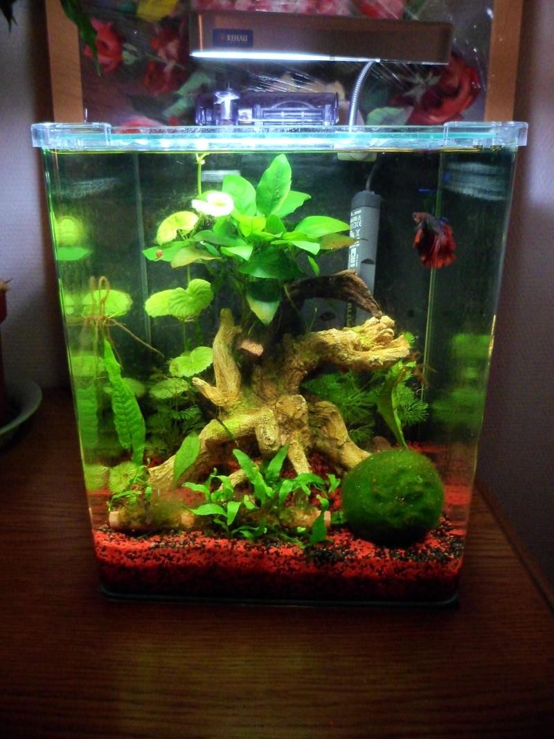 Nano 20l de popcorn1 for Quoi mettre aquarium poisson rouge