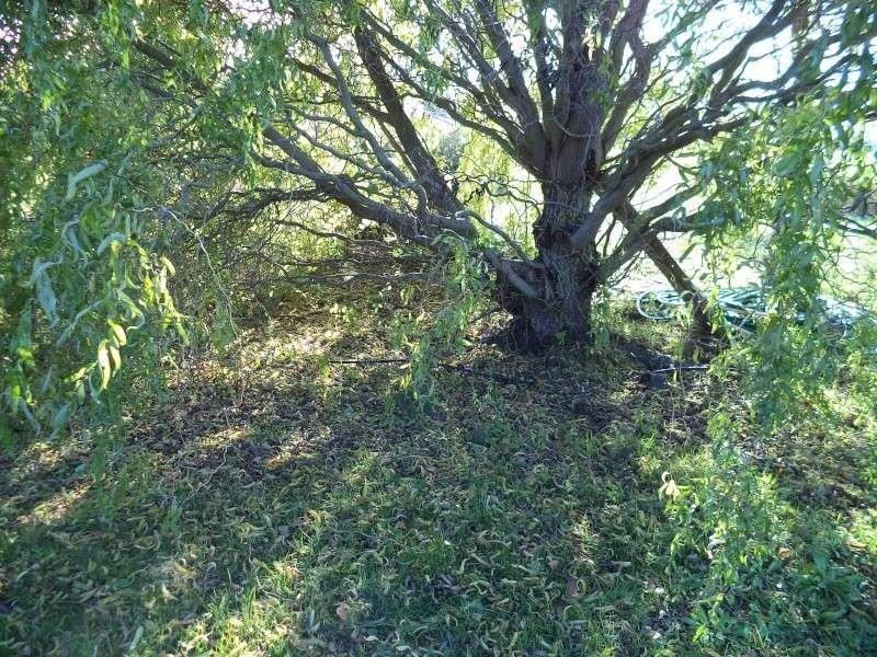 Petit photoreportage sur une saison calendaire et demi for Couverture plante hiver