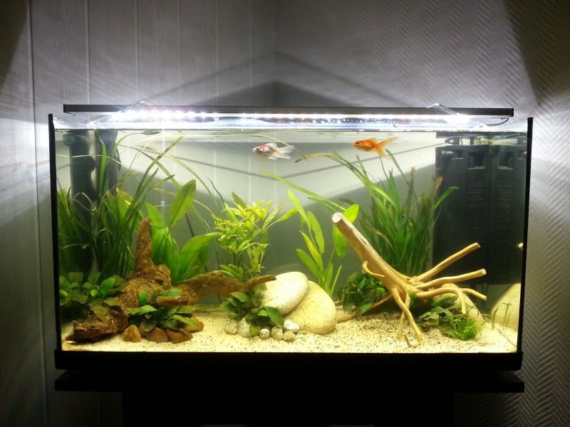 Mon premier aquarium bac ouvert 100l for Aquarium ouvert
