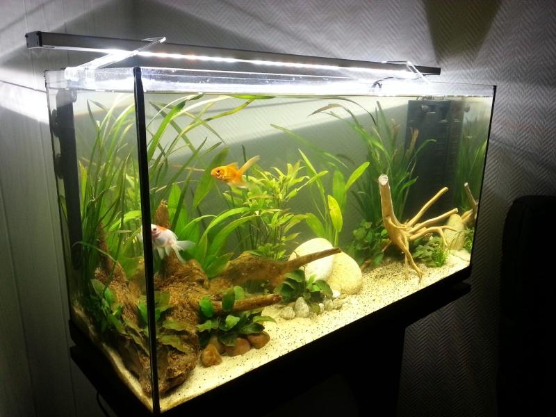 Mon premier aquarium bac ouvert 100l for Aquarium 20l pour poisson rouge