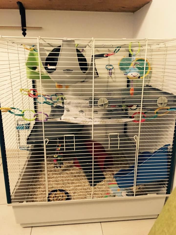 photos de vos cages page 9. Black Bedroom Furniture Sets. Home Design Ideas