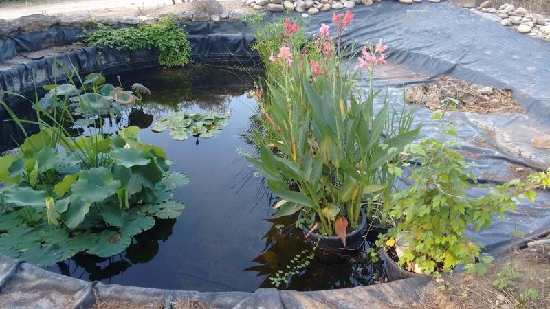 Quelques conseils pour mon jardin for Conseil pour le jardin
